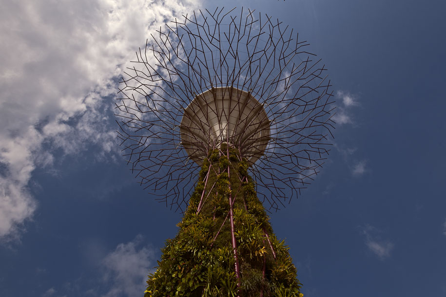 'Supertree' (Jul 2012) - Gardens by the Bay, Singapore
