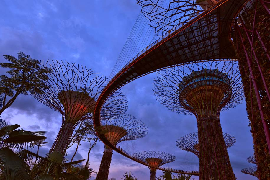 'Supertrees at Dusk' (Jul 2012) - Gardens by the Bay, Singapore