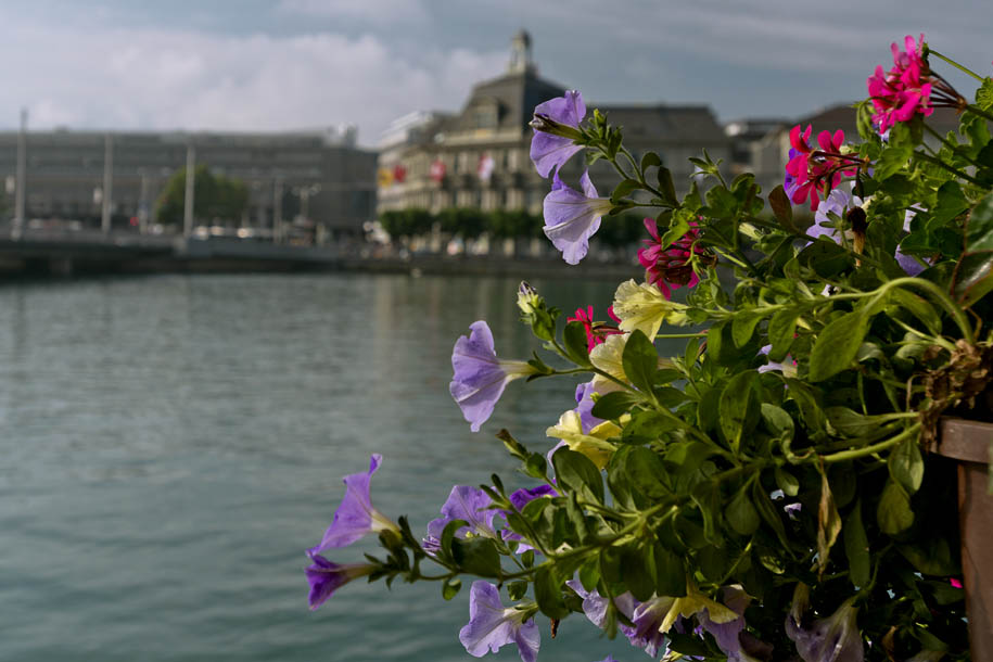 'Flowers by the River' (Jun 2014) - Lucerne, Switzerland
