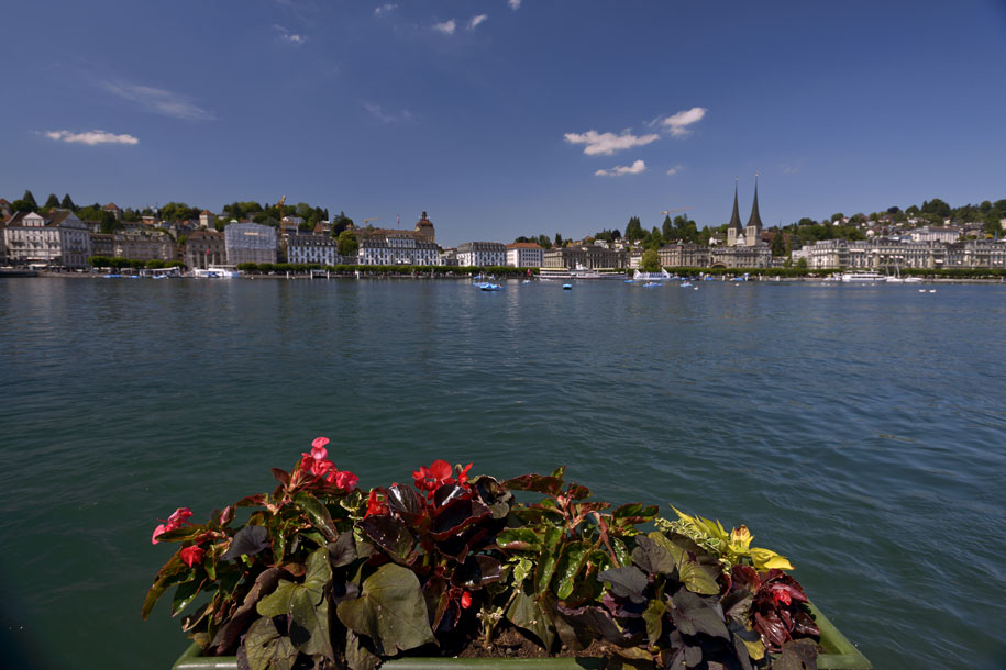 'Flower Bed by the Lake' (Jun 2014) - Lucerne, Switzerland